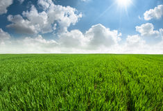 Beautiful fresh grass field with blue sky. Royalty Free Stock Images