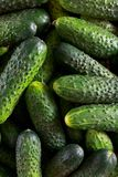 Beautiful fresh green cucumbers with water drops on a market with dark natural light. Appetizing vegatables stock photography