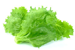 Beautiful fresh green lettuce Royalty Free Stock Photography