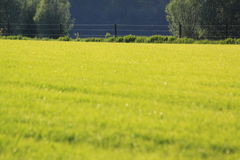 Beautiful fresh green meadow of grass Stock Photos