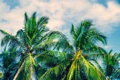 Beautiful fresh green palm trees Stock Photo