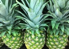 Green Market Fresh Pineapple ready to Buy Royalty Free Stock Images