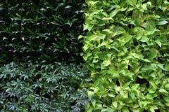 Beautiful Fresh Green Plantation Stock Images