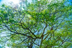 Beautiful fresh green tree background Royalty Free Stock Photography