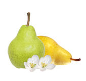 Beautiful fresh green and yellow pears and white flowers Royalty Free Stock Photos