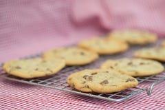 Beautiful fresh hand made chocolate chip cookies Royalty Free Stock Image