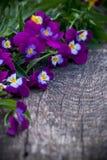 Beautiful fresh heartsease on wooden board Stock Photography