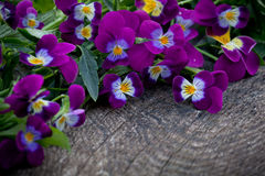 Beautiful fresh heartsease on wooden board Royalty Free Stock Images
