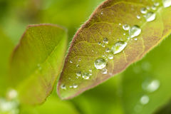 Beautiful fresh leaves Royalty Free Stock Photography