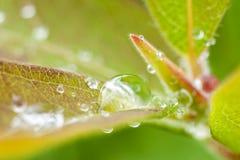 Beautiful fresh leaves Stock Photography