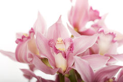 Beautiful fresh lily bouquet. Stock Photography