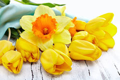 Beautiful fresh narcissus  and tulips on white wooden background Royalty Free Stock Images