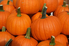 Beautiful fresh picked orange organic pumpkins Stock Images