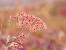 Beautiful fresh pink flowers field, abstract dreamy floral background, sun light, soft focus, spring season Royalty Free Stock Photography