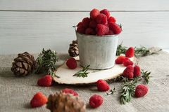 Fresh pink raspberry in a small bucket. Beautiful fresh pink raspberry in a small bucket with cones and rosemary Royalty Free Stock Photos