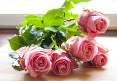 Beautiful fresh pink roses. Royalty Free Stock Images