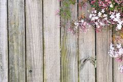 Flower wooden background Stock Photography