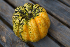 Beautiful fresh pumpkins in the sunshine Stock Photography
