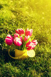 Beautiful Fresh Purple Tulips in Yellow Watering Can on Grass. S. Pring, Summer or Holiday Concept Stock Photography