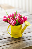 Beautiful Fresh Purple Tulips in Yellow Watering Can on Wooden T. Able. Spring, Summer or Holiday Concept Stock Images
