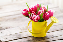 Beautiful Fresh Purple Tulips in Yellow Watering Can on Wooden T. Able. Spring, Summer or Holiday Concept. Horizontal with Copy Space Stock Photos