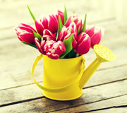 Beautiful Fresh Purple Tulips in Yellow Watering Can on Wooden T. Able. Spring, Summer or Holiday Concept. Toning Stock Photos