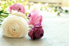 Beautiful fresh ranunculus flowers. On table Stock Photos