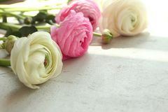 Beautiful fresh ranunculus flowers. On table Royalty Free Stock Images