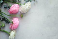 Beautiful fresh ranunculus flowers. On textured background Stock Photography