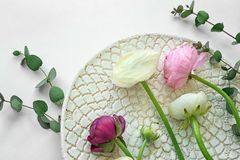 Beautiful fresh ranunculus flowers. On white background Stock Photos