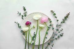 Beautiful fresh ranunculus flowers. On white background Royalty Free Stock Photos