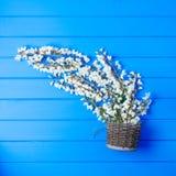 Beautiful fresh ranunculus flowers on wooden background. Beautiful fresh ranunculus flowers on wooden Royalty Free Stock Photo