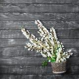 Beautiful fresh ranunculus flowers on wooden background. Beautiful fresh ranunculus flowers on wooden Stock Photography