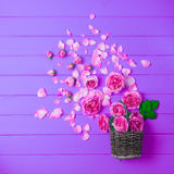 Beautiful fresh ranunculus flowers on wooden background. Beautiful fresh ranunculus flowers on wooden Royalty Free Stock Image