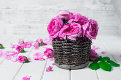 Beautiful fresh ranunculus flowers on wooden background. Beautiful fresh ranunculus flowers on wooden Stock Images