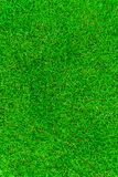 Beautiful fresh real green grass texture Royalty Free Stock Photography