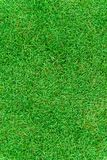 Beautiful fresh real green grass texture Stock Photo