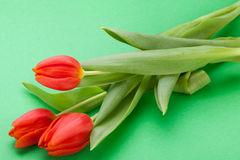 Beautiful fresh red tulips for a loved one Stock Photography