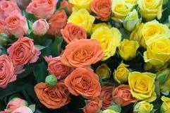 Beautiful fresh roses background Stock Images