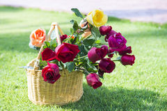 Beautiful fresh roses in basket on the grass Stock Image