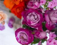 Beautiful fresh roses Royalty Free Stock Images