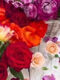 Beautiful fresh roses Royalty Free Stock Photo