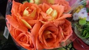 Velvety Orange Roses. Beautiful fresh roses. Orange velvety flowers Royalty Free Stock Images