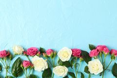 Beautiful fresh roses with space for text on color background. Top view royalty free stock photos