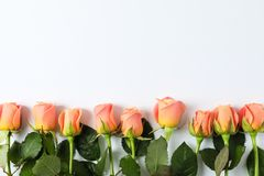 Beautiful fresh roses with space for text on white background. Top view stock image