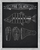 Beautiful fresh salmon closeup side view drawn with chalk. Pink. Salmon cutting scheme black and white colors. Menu on blackboard Stock Image