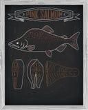 Beautiful fresh salmon closeup side view drawn with chalk. Pink Stock Photos