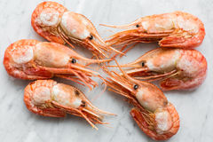 Beautiful fresh shrimps on a light marble background.  Stock Photography