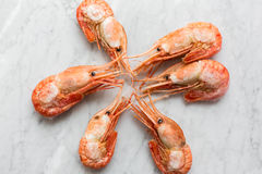 Beautiful fresh shrimps on a light marble background Stock Photography