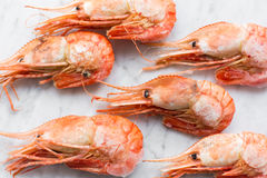 Beautiful fresh shrimps on a light marble background. Close up Royalty Free Stock Image